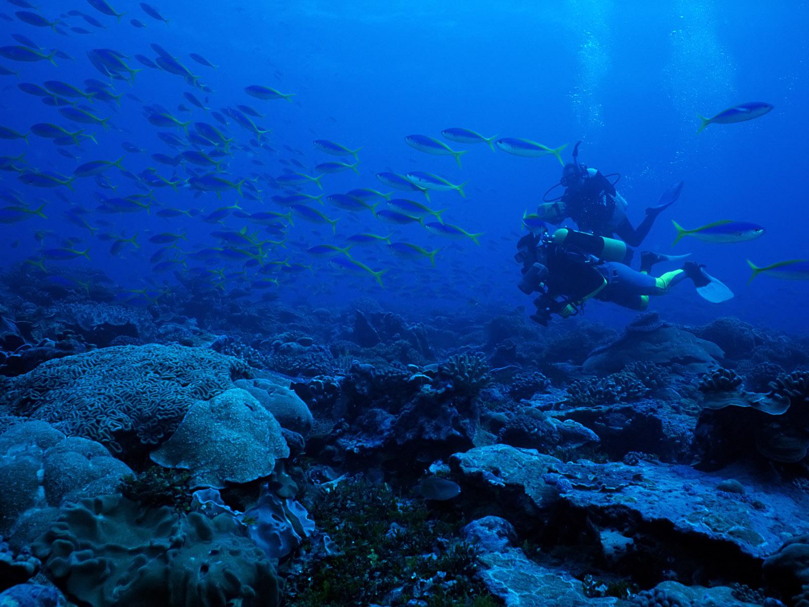 underwater cartoon wallpaper - photo #40
