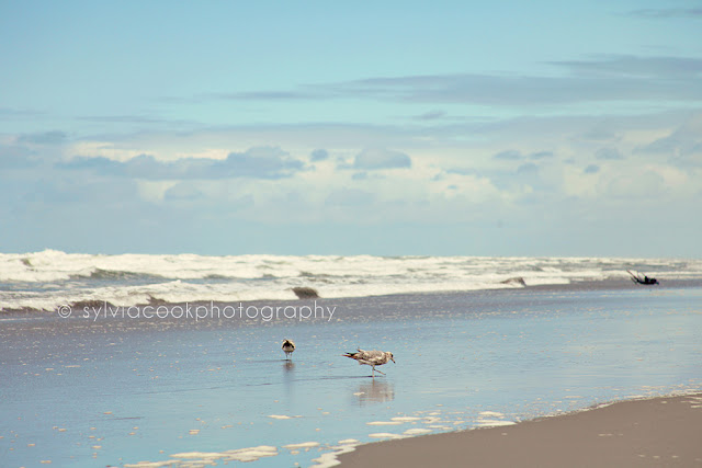 Long Beach Washington ocean photograph