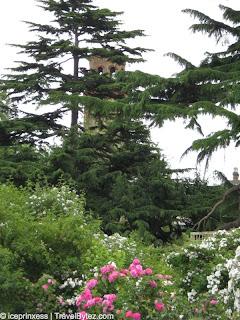 London Kew Gardens Flowers