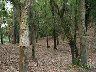 Caminant pel bosc a prop de l'ermita de Sant Ponç