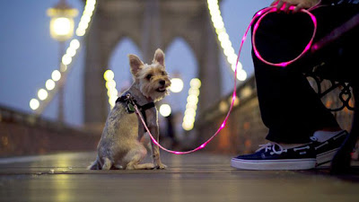 foot dog lead Fashion