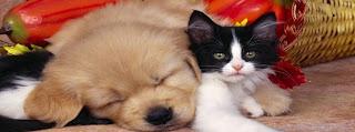 Couverture journal Facebook mignon chat et chien