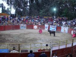 Toros 2012