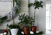 #3 Indoor Plant Decoration Ideas