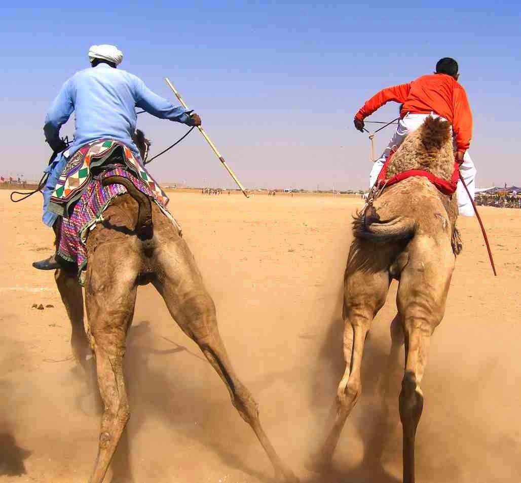 camel race logical riddle