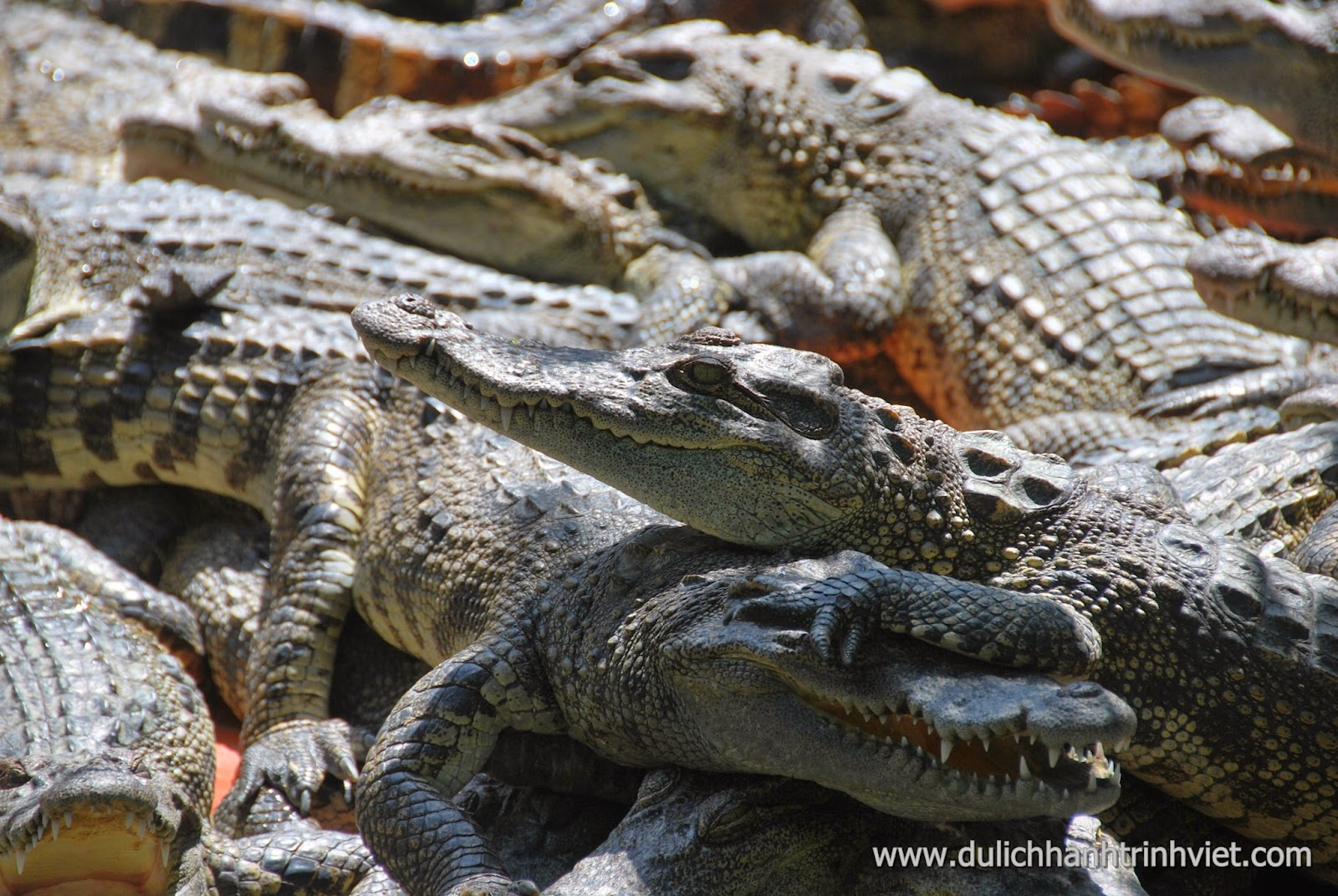 Visite du village écotouristique de crocodiles à Long Xuyen