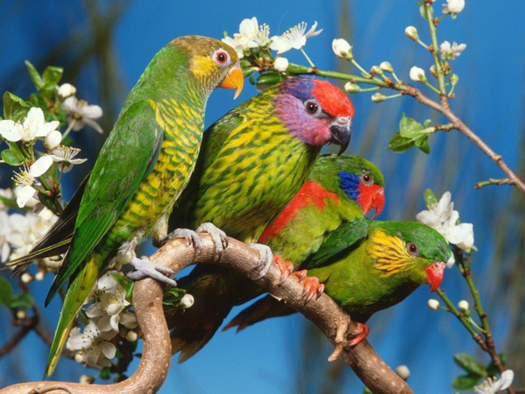 tag birds wallpapers backgrounds photos images andpictures for