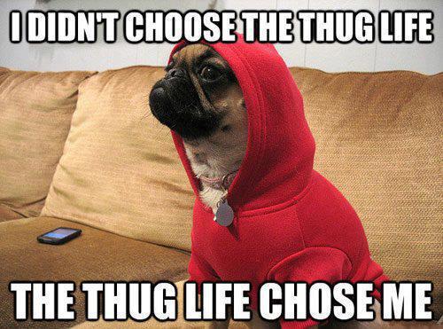 Funny Meme Thug Life : Funny animal memes part