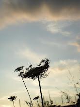 Rozando el cielo...
