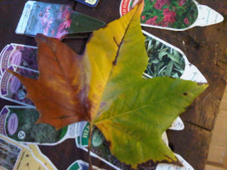 Autumn+Colour-Compton+Verney-London+Plane+Leaf-Gary+Webb