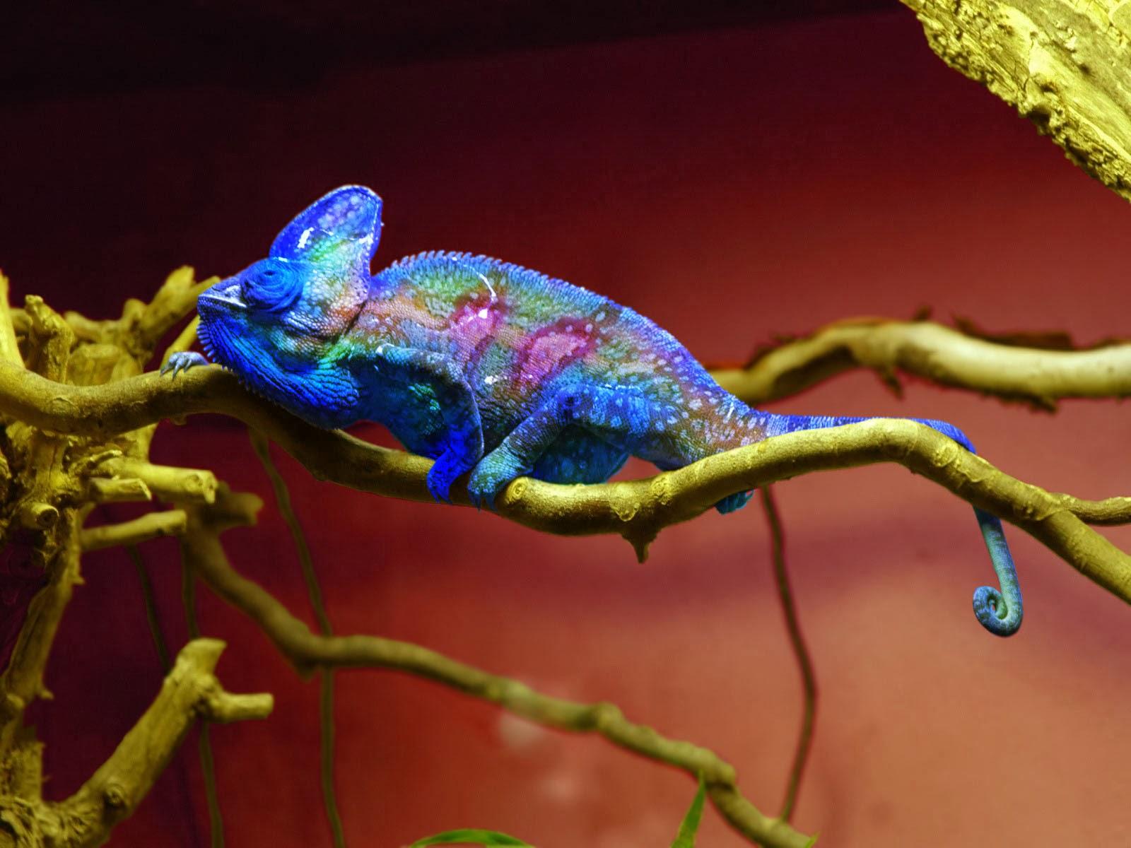 Colorful Chameleons - Lessons - Tes Teach