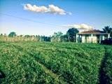 Vende-se uma área de terra a 6 km da cidade de Mairi