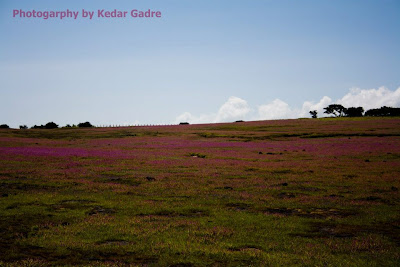 Flower bed, Kaas Plateau