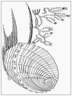 Shell Coloring Pages For Adult