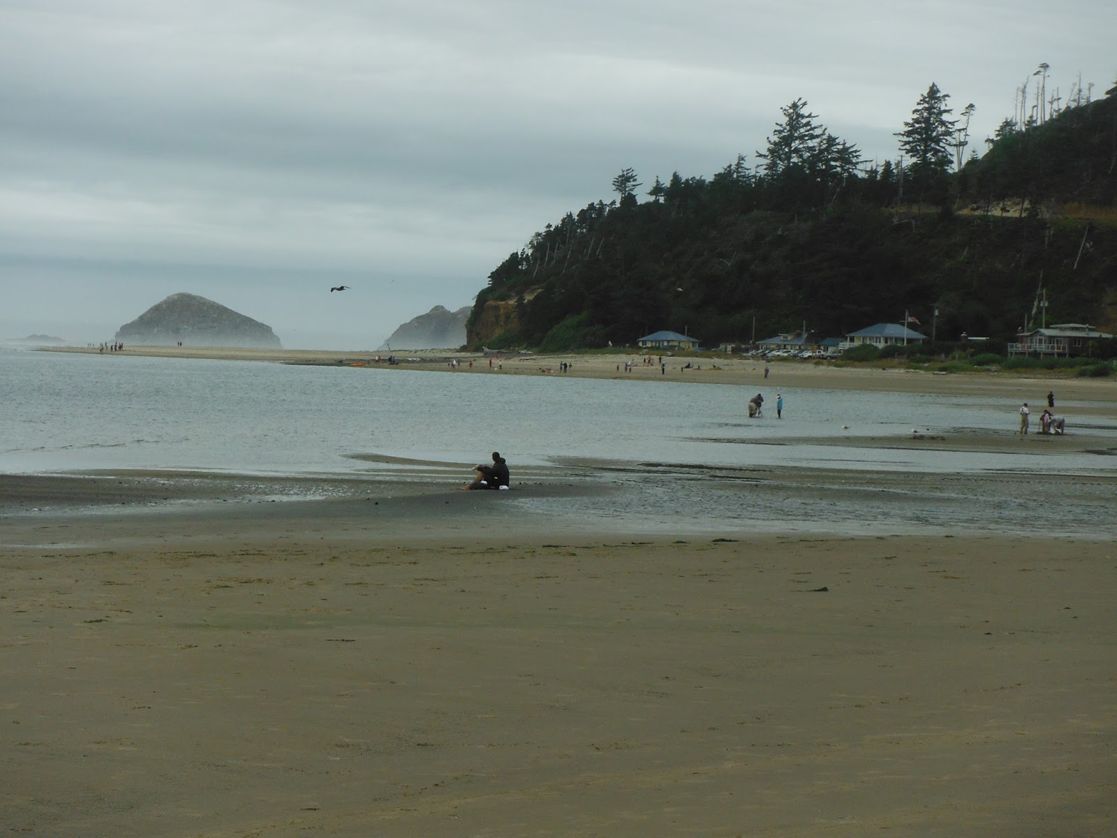 The Beach At Netarts Looking Toward Happy Camp August 2015