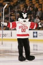 Boston University Terrier Gruppensex