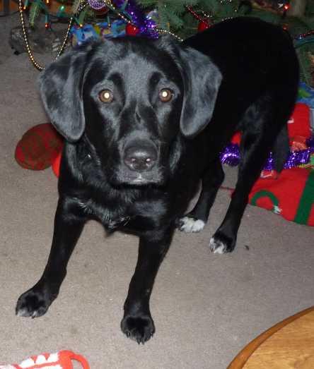 Give Dogs Luna Sleep Aid