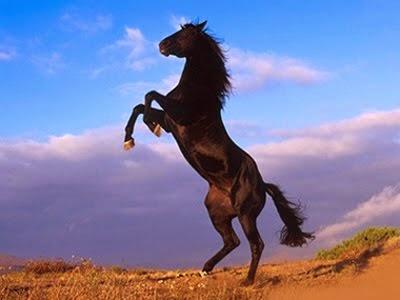 http://tipspetani.blogspot.com/2014/12/beberapa-penyakit-pada-kuda.html