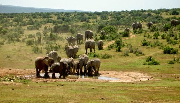 Kruger National Park, Sydafrika