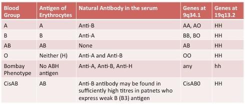 Hh antigen system #