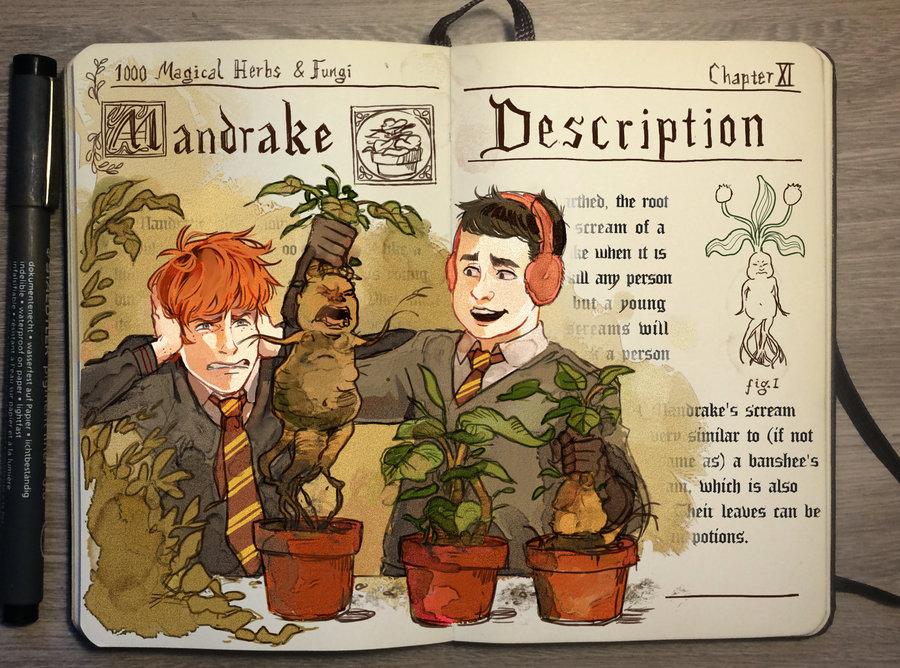 01-Mandrake-Gabriel-Picolo-kun-Harry-Potter-Moleskine-Drawings-of-Wizard-Spells-www-designstack-co