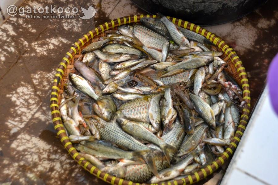 Ikan sungai Serayu