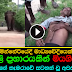 Wild elephant attack kills cameraman in Minneriya