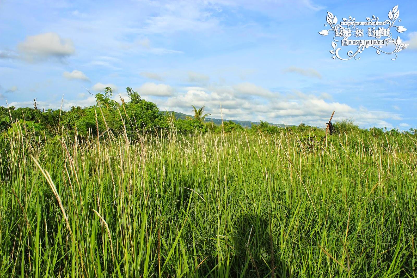 jalan menuju hutan bakau baros