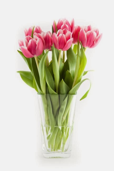 Gambar Bunga Tulip Valentines Day I Love You