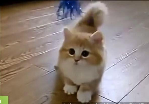 Mondo animali luglio 2014 for Youtube cani e gatti