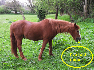 Horse who told lies