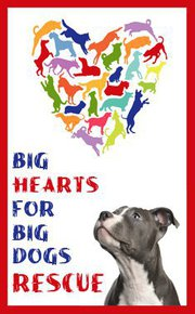 Big Hearts for Big Dogs