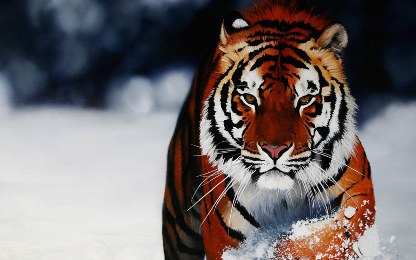 Download Animals Wallpapers In High Definition Resolution Wide Screen And Quality You Can See Set As A Desktop Background