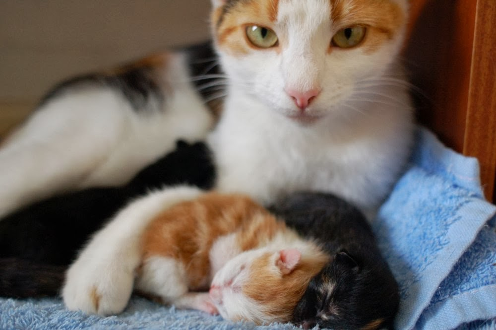 Funny cats - part 86 (40 pics + 10 gifs), momma cat and her newborn kittens