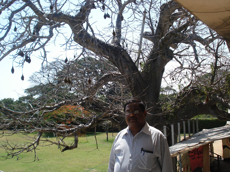 Under the shade of Baobab tree