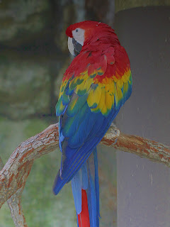 Macaw + Grayscale Gradient;  Mode Value; Opacity 50%