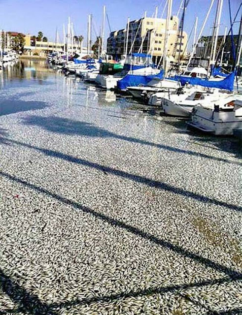 Mass fish death in California