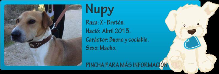 http://mirada-animal-toledo.blogspot.com.es/2013/11/nupy-pequeno-en-adopcion.html