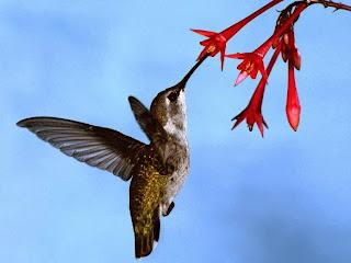 5 Cara Menaklukkan Algoritma Google Hummingbird!