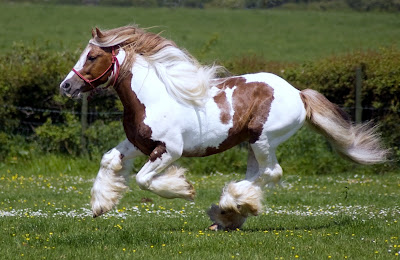 computer wallpaper, wallpapers for computer, wallpaper for computer, horse pictures, free desktop wallpaper of horses, horses wallpapers, horses pictures