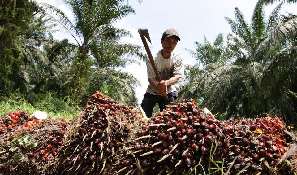 l 39 huile de palme non l 39 huile de palme est partout et elle d truit les for ts d 39 asie du sud est. Black Bedroom Furniture Sets. Home Design Ideas