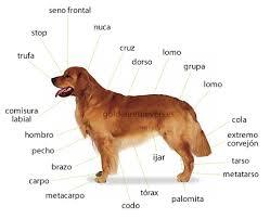 ww todo perro com: