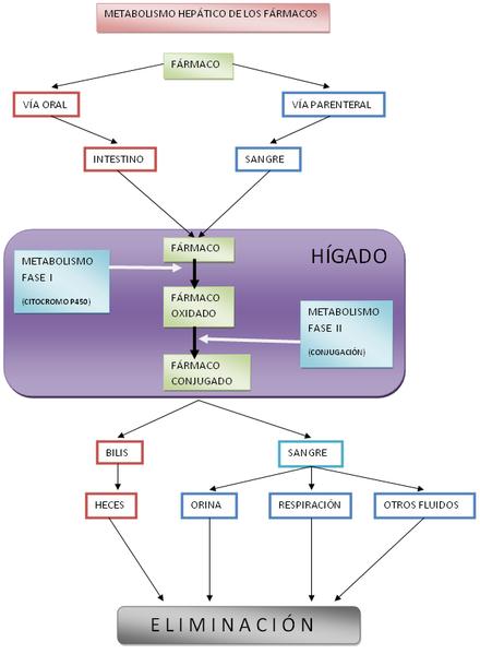 rutas anabolicas y metabolicas