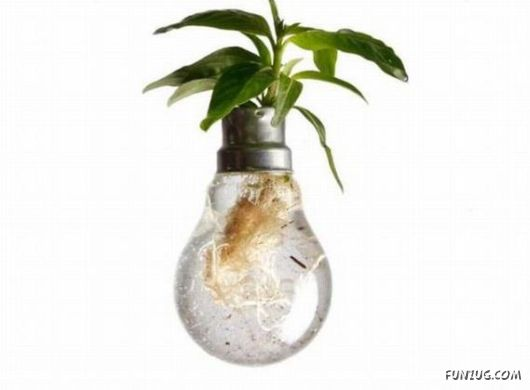 Creative art in a bulb