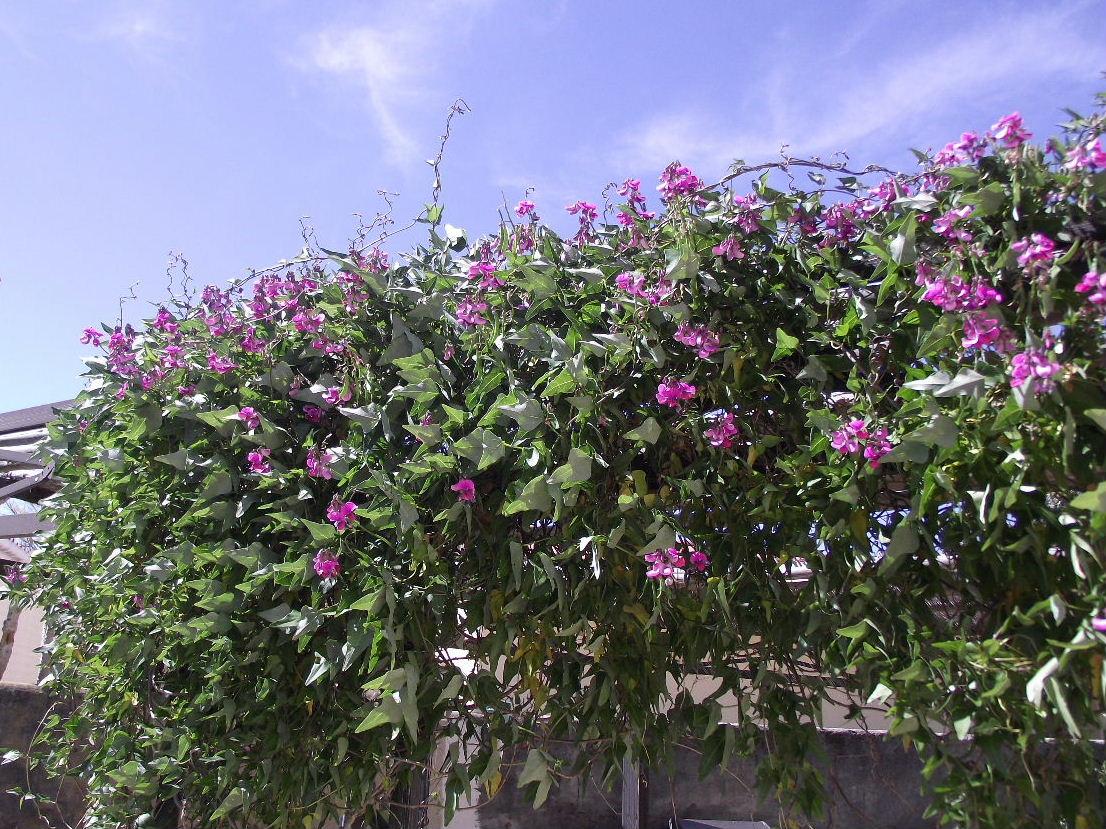 My Cape Garden