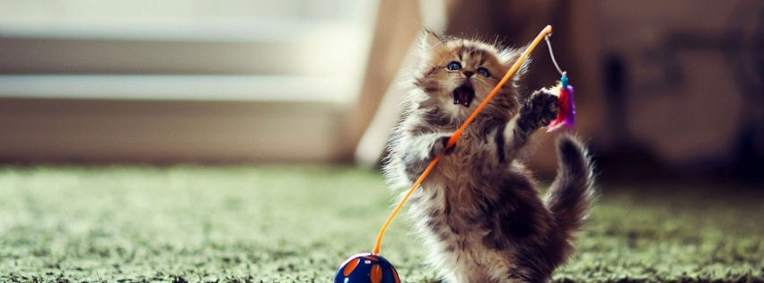 Topla oynayan sevimli kedicik kapak resimleri