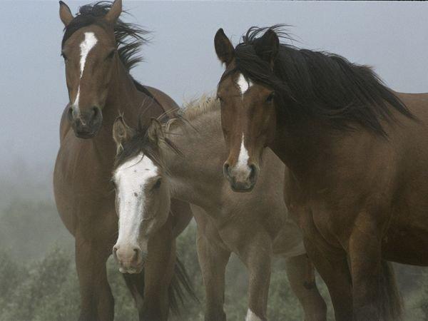 patagonia-wildlife-horses
