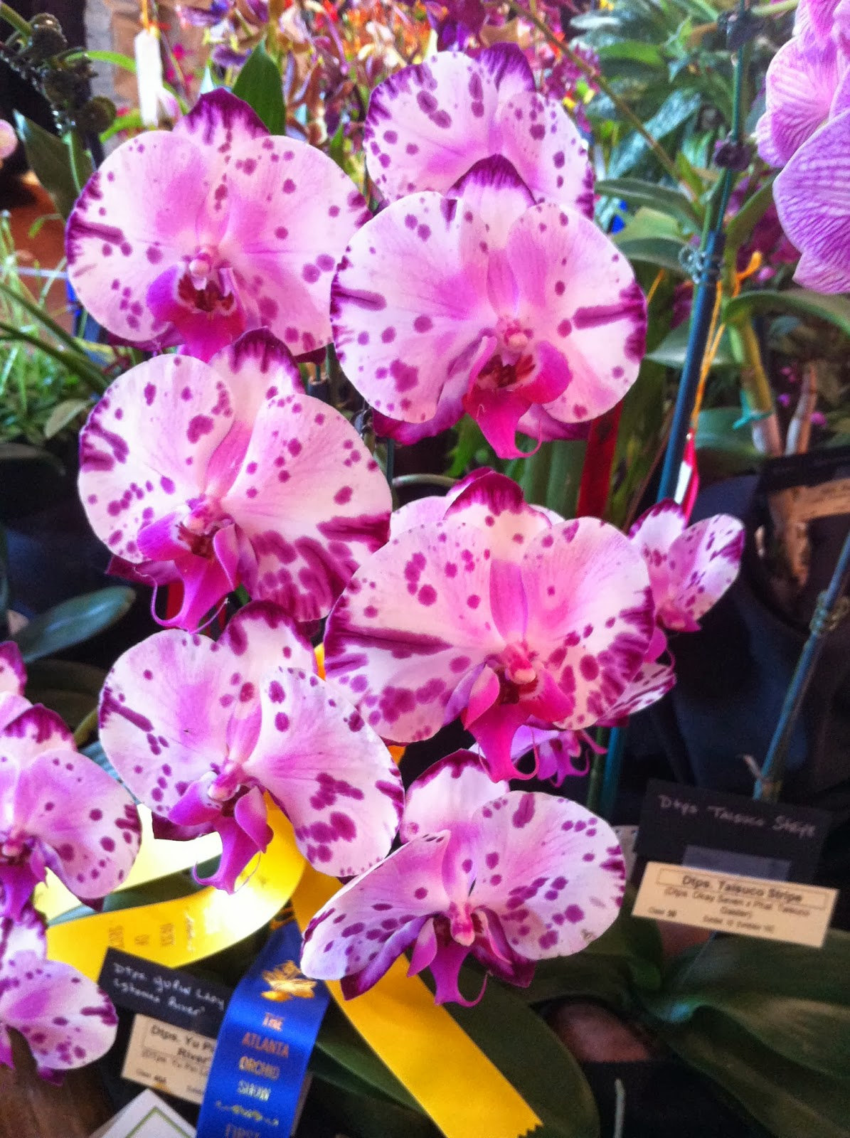 Northeast alabama orchid society