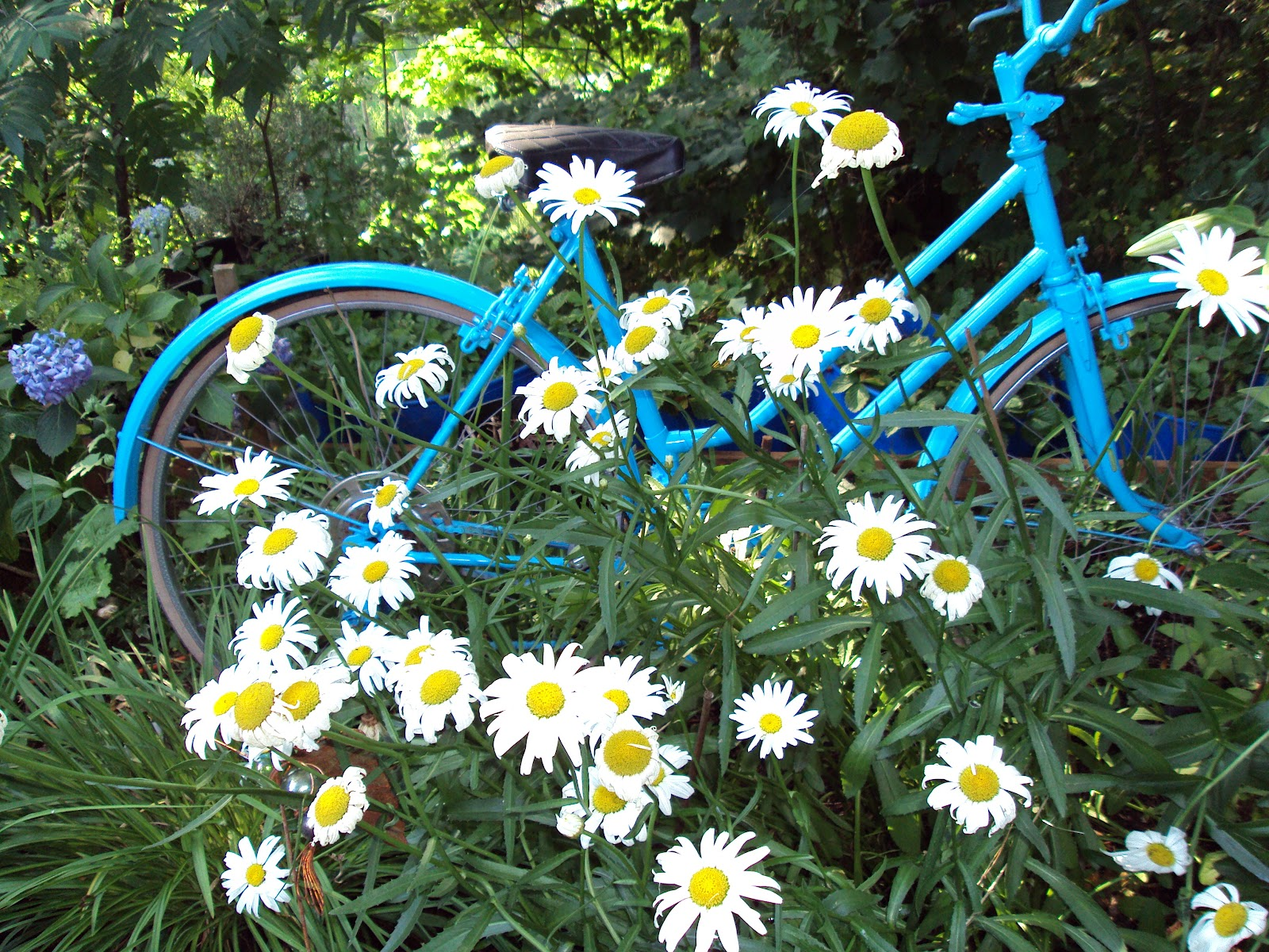 Linda's Serenity Garden: Garden Design - Garden Focal Points