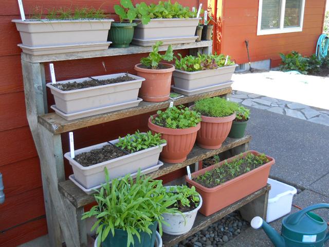 Plantando em pequenos espaços
